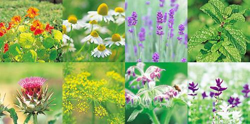 herbgarden_66