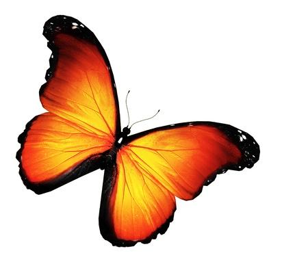 14961017-orange-butterfly-on-white-background